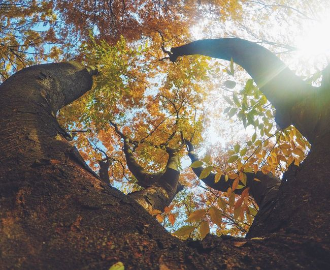 Leaf Nature Autumn Tree No People Beauty In Nature Branch Day Outdoors Low Angle View Growth Scenics Close-up