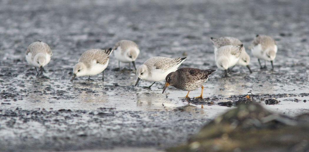 Animal Bird Bird Photography Birds Birdwatching Nature Seaside Wildlife