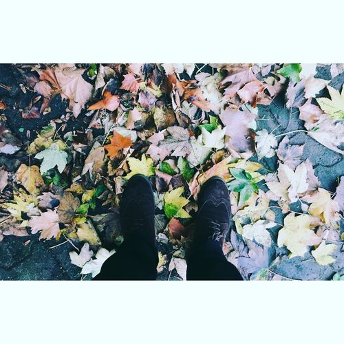 Low Section Leaf Change Autumn Auto Post Production Filter Person Season  Standing Shoe Personal Perspective Dry Transfer Print Leaves High Angle View Fallen Covering Men Abundance Leisure Activity Lifestyles First Eyeem Photo