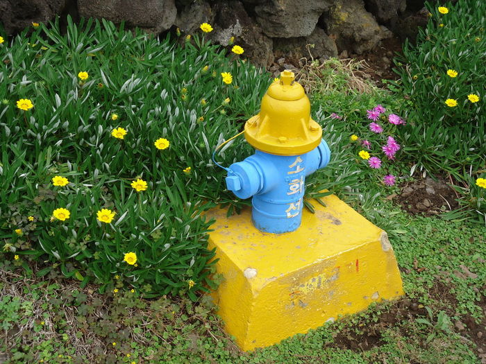 Beauty In Nature Day Fire Hydrant Flower Flower Head Flowerbed Freshness Front Or Back Yard Grass Growth Nature No People Outdoors Plant Springtime Summer Tranquility Water Yellow