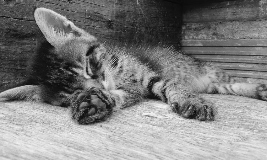 EyeEm Animal Photography Cats 🐱 Animals🐾 Domestic Animals Sleeping Cat Animal Themes One Animal Animal Love Animal Blackandwhite Animalbaby Animals