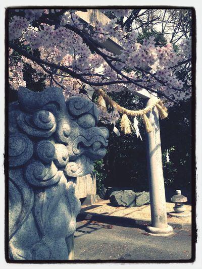 Spring Japan Sakura Japan in spring.
