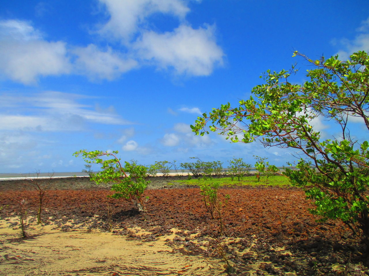 Scenic View Of Field By Sea Against Sky