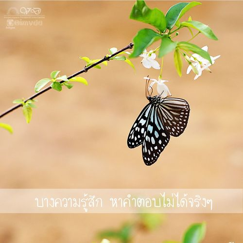 Butterfly, Home, Phatthalung. Good Morning Butterfly Close-up Nature Phatthalung Thailand Sony Sonyalpha SonyA500 Fix50mm Nofilter