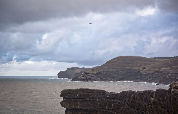 A seagull flies over the coast of Cantabria Cantabria Coastline Green Panoramic View Relaxing SPAIN Surf Travel Ajo Bareyo Cantabriainfinita Clouds Coast Isla Ocean Rocks Scenics Sea Seagull Seascape Sky Tranquil Scene