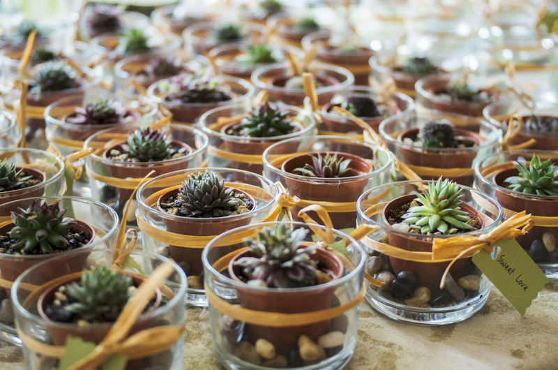 Potted Plants Arranged On Floor
