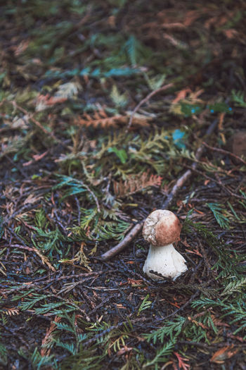 Autumn Boletus Edulis Freshness Growth Nature Beauty In Nature Close-up Day Fall Forest Floor Fragility Fungus Mushroom Nature No People Outdoors Surface Level Toadstool Vegetable