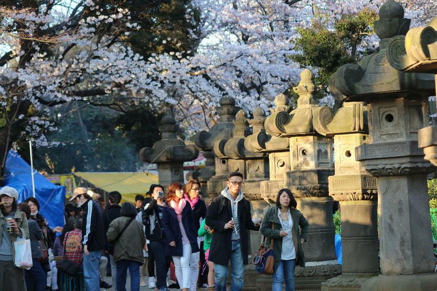 Cherry Blossoms Spring Flowers Springtime Spring! Flowerporn Flowers Cherry Blossom Cherry Trees Sakura☆cherry Blossam