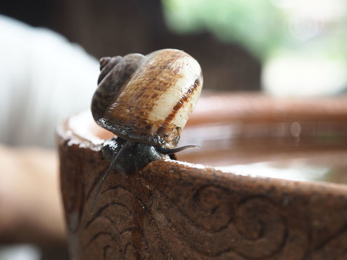 Water Close-up Snail Shell Antenna Turtle Crawling Sea Turtle Animal Antenna Tortoise Shell Mollusk Gastropod African Elephant Butterfly - Insect Caterpillar Animal Trunk Slug Tortoise Slow Animal Shell Reptile