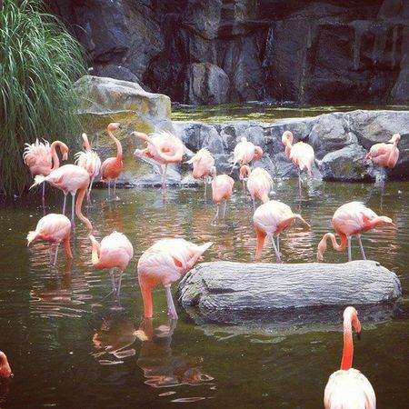 Temaiken Flamingo Flamenco