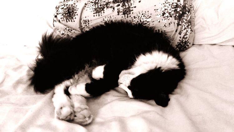 Just a nap Horuscat Nap Cat Timbearlake