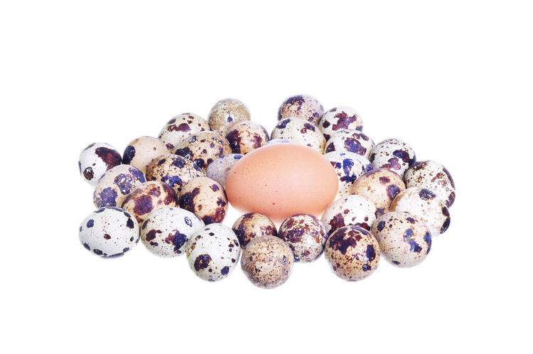 comparison chicken egg versus quail eggs for business concept over white background Breakfast Business Concepts Chicken Chicken Egg Cholesterol Competition Easter Edible  Eggs Eggshell Industry Organic Protein Quail Shell Spotted Survival