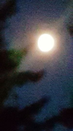 The moon and a tree, a little abstract. Urban Nightsky