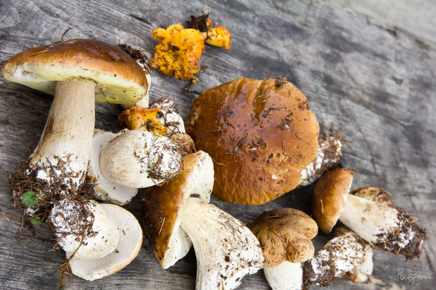 Padis, Transylvania Hiking Hungary Padiș Romania Transylvania Close-up Day Food Food And Drink Freshness Fungus Healthy Eating High Angle View Hungarian Indoors  Mushroom No People Ready-to-eat Wood - Material