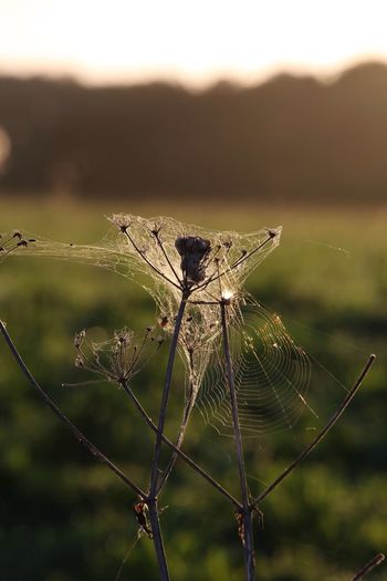 The wonderful architecture of the spider... I wonder if the extension on the rest of the plant didn't need planning permission and building regulations were completely ignored! Lol. Tangled Spiderweb Focus On Foreground Earlymorning  Outdoors Beauty In Nature Strongyetdelicate