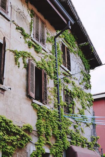 Italy🇮🇹 Architecture Building Exterior Built Structure No People Ivy Outdoors Day Nature Art On Wall Plant Growing In Building Green Green Green!  Nature