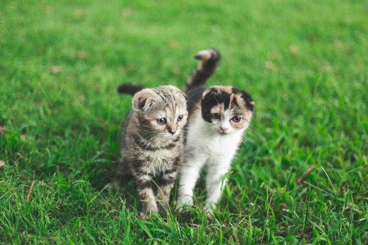 Portrait of cats on grass field