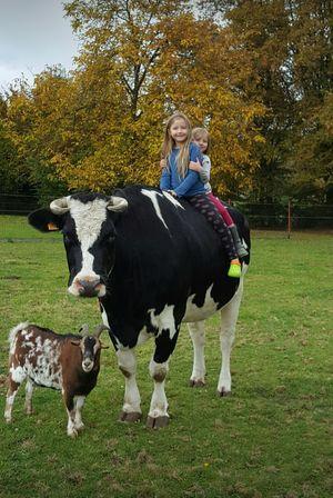 Domestic Cows Domestic Animals Cows🐮 Cow Animal Themes Animal Animal Photography Animal Family Animal Love Outdoor Animals
