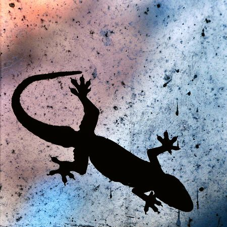 The Common House Gecko Silhouette on Windows Gecko Lizard House Gecko Animal Nature No People Window House Silhouette Backlight Black Backlite Day Hemidactylus Fretanus Silhoutte Photography House Lizard Gradationcolor