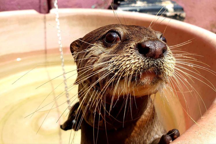 Water Pets Portrait Wet Close-up Animal Body Part