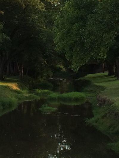 Creekside Trees