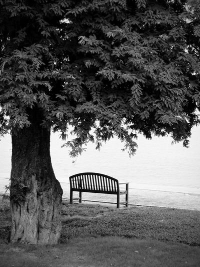 Plant Tree Nature Seat Bench No People Day Growth Park Absence Trunk Tree Trunk Outdoors Empty Grass Land Park - Man Made Space Tranquility Field Beauty In Nature Park Bench Black And White