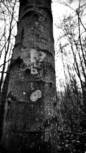 ! Tree Tree Trunk Sky Close-up Nature Day Outdoors Focus On Foreground Wald Germany EyeEm Gallery Tree No People Deforestation Ausruf Satzzeichen Nocolour