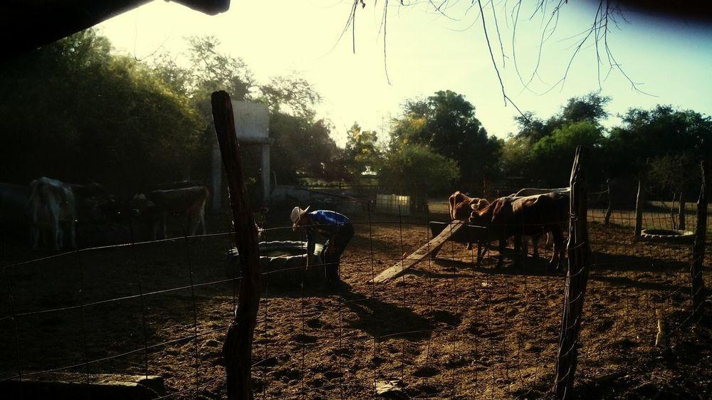 Cown Granjero Vacas Ganado Tree Oil Pump Outdoor Play Equipment Playground Jungle Gym Sky