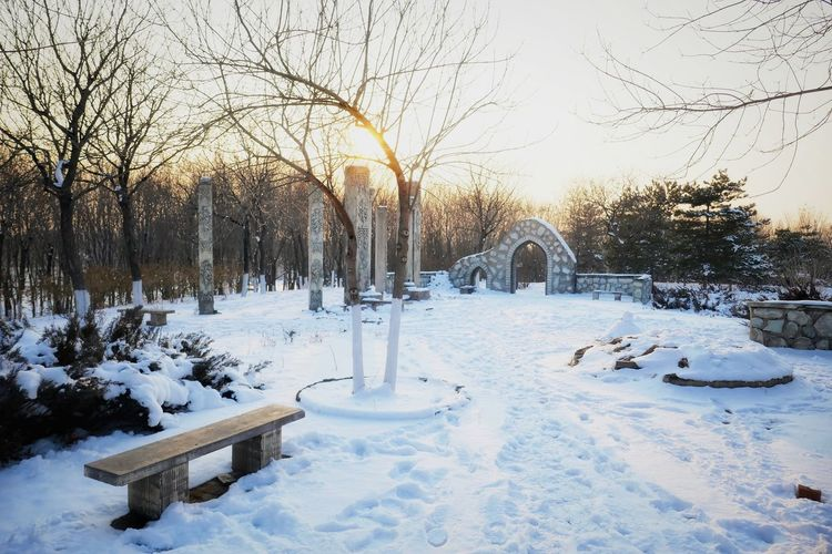 Snow covered plants and trees in park during winter