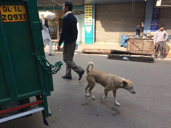 Untitled Pets Streetdog Iphoneonly IPhone Streetphotographyindia Streetphotography One Animal First Eyeem Photo
