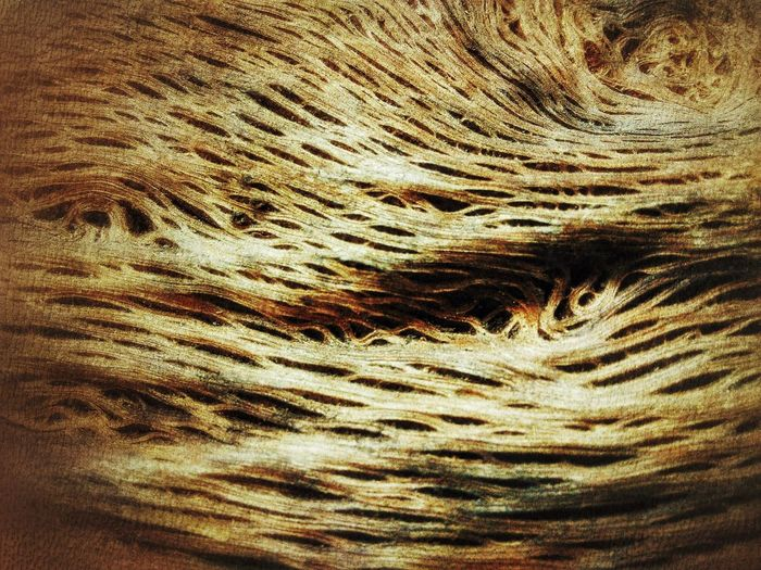 Skin of a tree, design wonders. Backgrounds Brown Close-up Detail Ecological Extreme Close Up Macro Natural Pattern Natural Skin Nature On Your Doorstep Naturelovers No People Pattern Sensory Perception Showcase March Textured  Tree Trunk Vegetable Skin Wood Lumicar