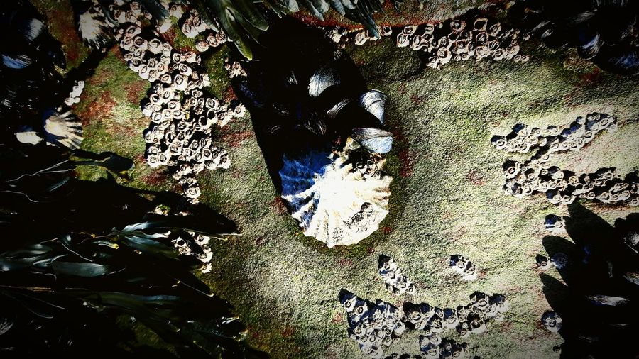 Ocean Sea Shell