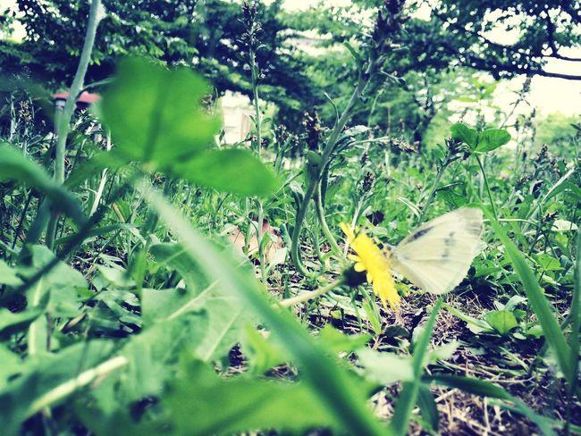 Butterfly Fllowers