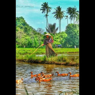 Old woman sheperd ducks Iloveaceh Icanphotography Throwback Photooftheday Memories Instamemory Miss Old Instamoment Instagood Igworldclub_country Insta_aceh Indonesia_photography Ig_worldclub Ig_indonesia_humaninterest Instanusantara Ig_indonesia_ Gf_daily Gf_indonesia  Likes4likes Global_hotshotz Gang_family Hot_shotz Wu_indonesia Wu_asia worldunion beautiful bestshot_ bestvacations tengokaceh