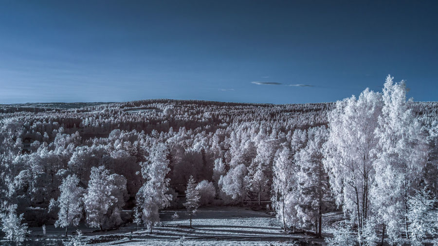 Panoramic view of trees against sky during winter