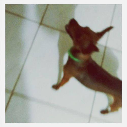 Doglover Dogsofinstagram ToddyDarc