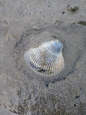 Clamshell in the sand. Sand Beach Nature High Angle View No People Close-up Outdoors Clamshell Buried Blue Texture