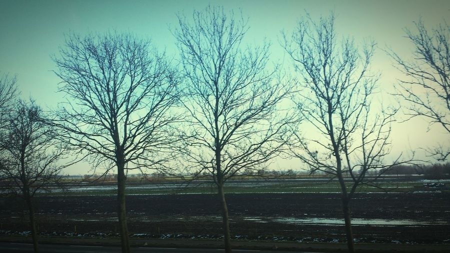 Trees next to the roadway.. lovely Selfmade Edited