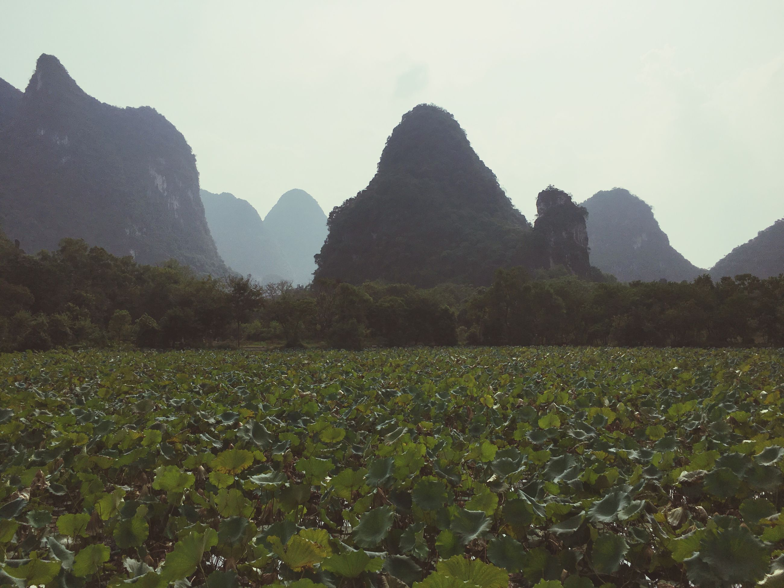 tranquil scene, scenics, beauty in nature, tranquility, clear sky, landscape, mountain, plant, nature, green color, agriculture, rock formation, growth, flower, non-urban scene, mountain range, rocky, majestic, geology, non urban scene, rural scene, outdoors, farm, remote, sky, physical geography, mountain peak, no people, solitude