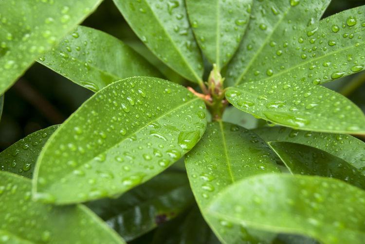 Full frame shot of raindrops on plant