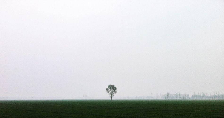 Single Tree In Field Against Sky