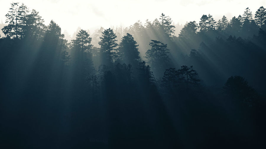 Sun rays through misty tree tops. Layers Point Reyes Tomales Bay Woodlands Sky Fog Tree Silhouette Forest Tranquility Sunrays Mono Sun Rays WoodLand Hazy  No People Idyllic Tranquil Scene Coniferous Tree Point Reyes National Seashore Sun Rays Through Trees Scenics - Nature