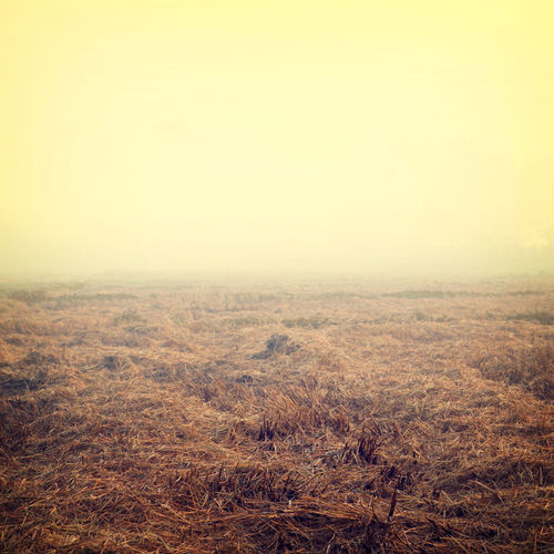 Vintage farmland in morning with fog - autumn season Autumn Rustic Vintage Style Agriculture Land Beauty In Nature Countryside Day Field Fog Grass Landscape Nature No People Outdoors Rural Scene Scenics Sky Tranquil Scene Tranquility Vintage Photo