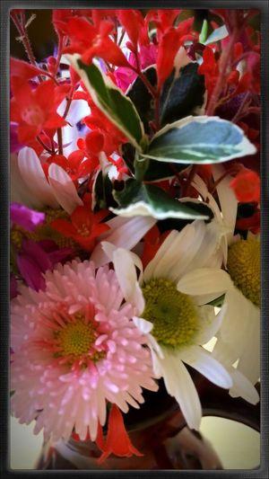 EyeEm Best Shots - My World Flower Porn Spring Flowers Beautiful Flowers