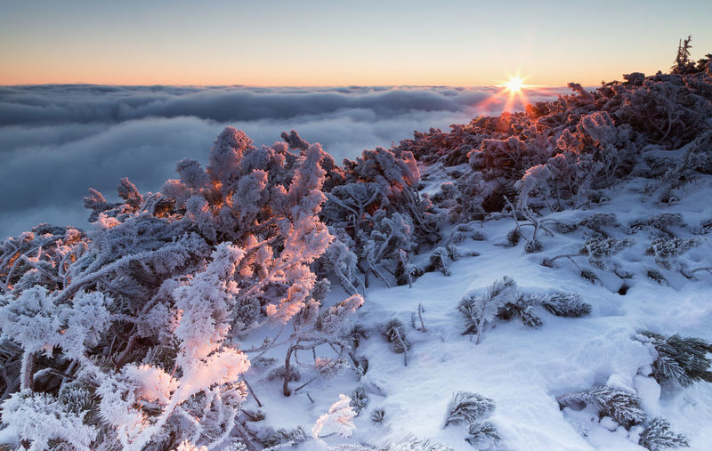 Sunrise in Ceahlau Mountains Beauty In Nature Blue Sky CEAHLAU Ceahlau Mountain Cold Temperature Day Foggy Foggy Day Frozen Landscape Nature No People Outdoors Polar Climate Scenics Sky Snow Sun Sunlight Sunlight And Shadow Sunrise Sunrise_Collection Sunrise_sunsets_aroundworld Tree Winter