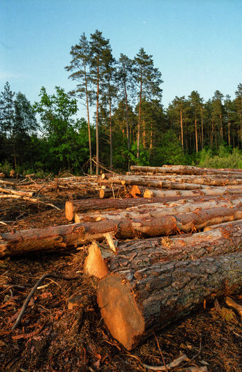 Block Clogs Cutting Cutting Trees Deforestation Deforestation Effect Deforestration Environment Environmental Damage Environmental Issues Forest Log Logs Lumber Industry Nature Nature No People No People, Outdoors Pile Stack Timber Tree Tree Wood - Material