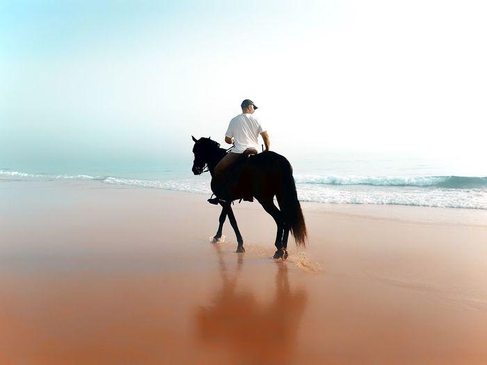 Rear view of man riding horse at beach