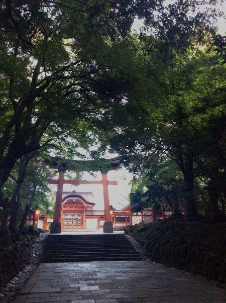 Tree Nature 九州 Shinto Shrine Archway 宇佐神宮 大分