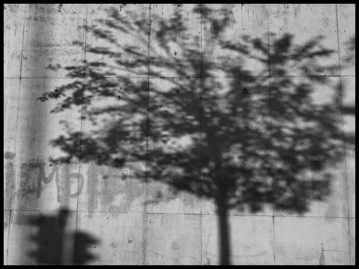 Tree Day No People Outdoors Growth Nature Close-up Sky Shades Of Grey Shadow And Light Black And White Blackandwhite Fragility Beauty In Nature Plant Fuzzy Shadows Sunlight And Shadow Sunlight, Shades And Shadows Sunlight Through Trees
