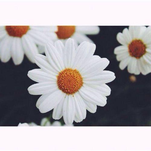 Flowers??